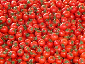 長谷川さんトマト